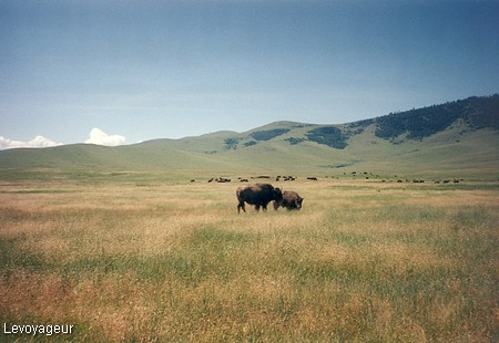 Photo - Montana - National Bison Range